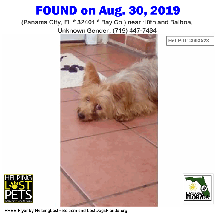 Pin By Lost Dogs Florida On Found Dogs