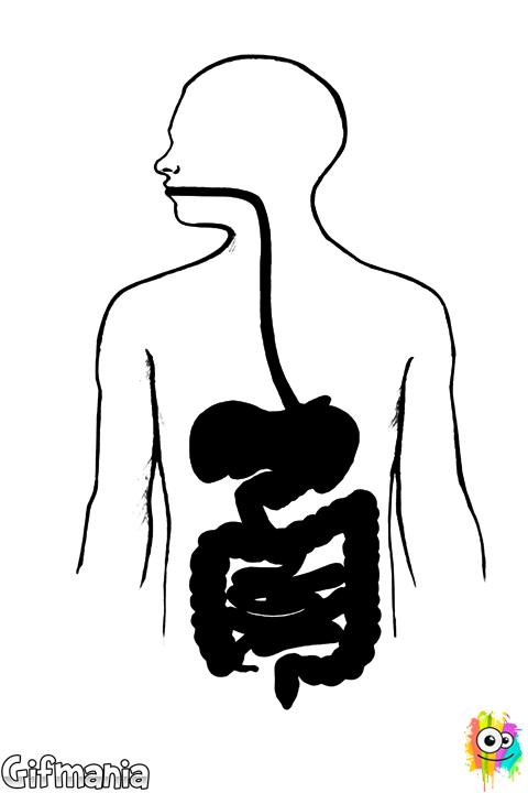 Dibujo De Aparato Digestivo Para Colorear Aparato Digestivo Aparato Digestivo Dibujo Aparatos