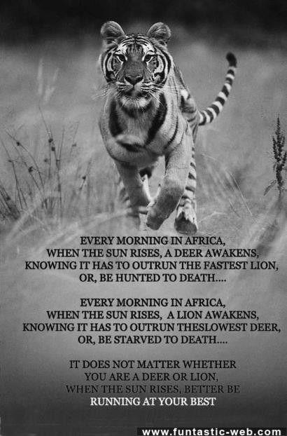 Every Morning In Africa Inspirational Pinterest Running
