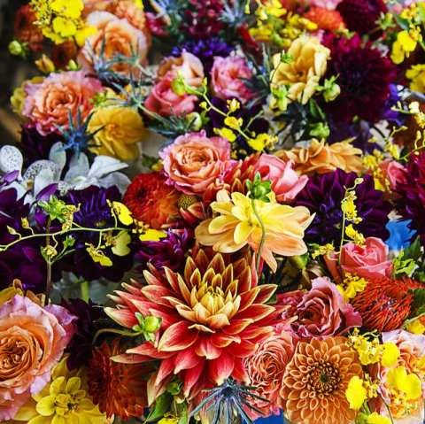 A Flower A Day Keeps The Doctor Away Birth flowers, Mums