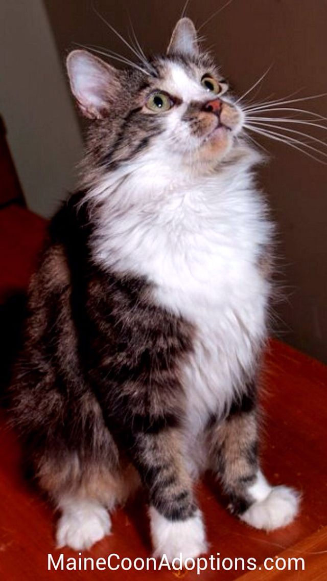 A Home Without A Cat Is Just A House Crazy Cats Beautiful Cats Cat Rescue