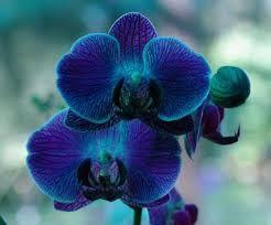 Resultado de imagen de orquídeas moradas