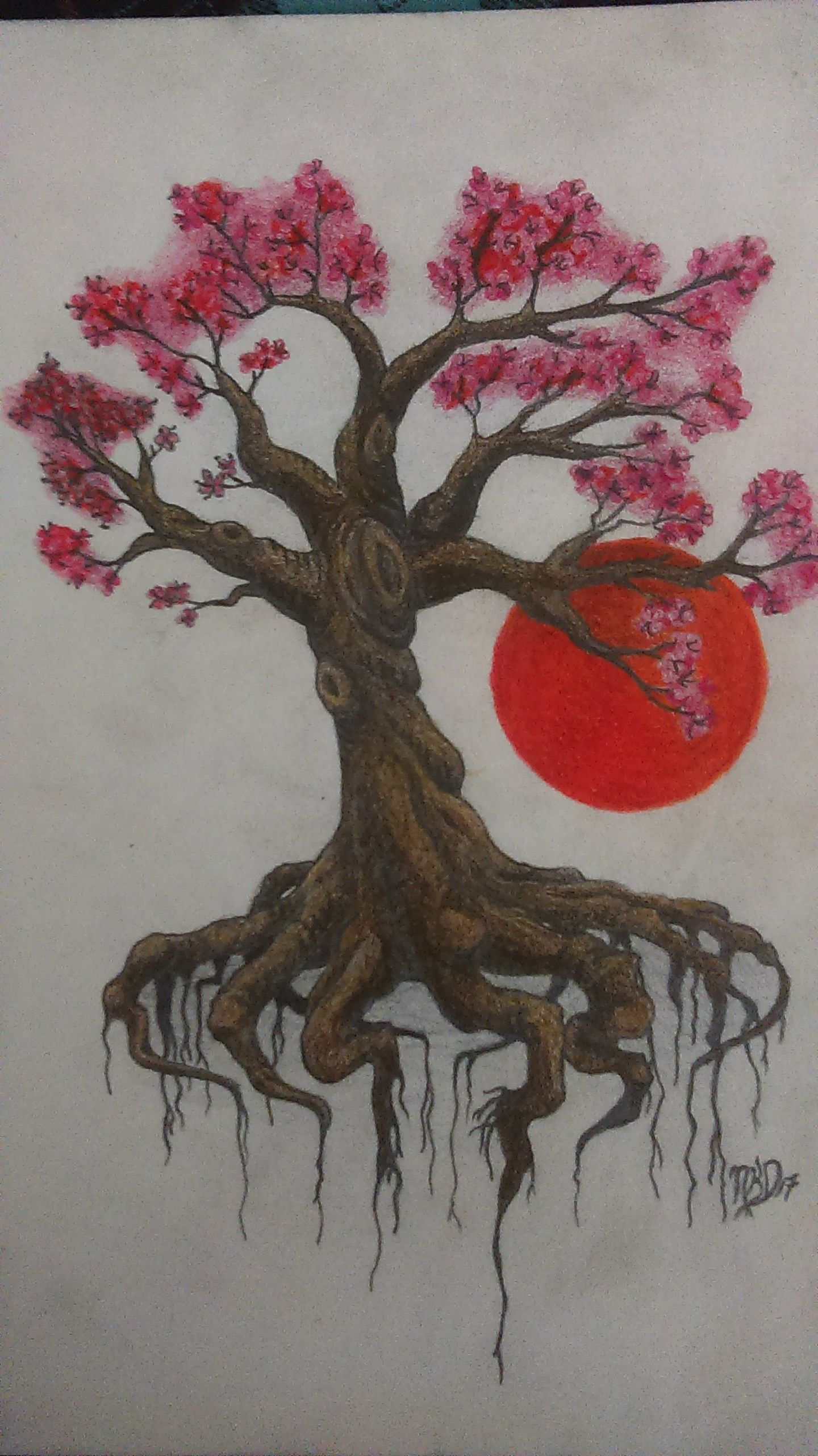Cherry Blossom Tree Colored Pencil 8x11 Tree Sketches Cherry Tree Tattoos Cherry Blossom Tree Tattoo