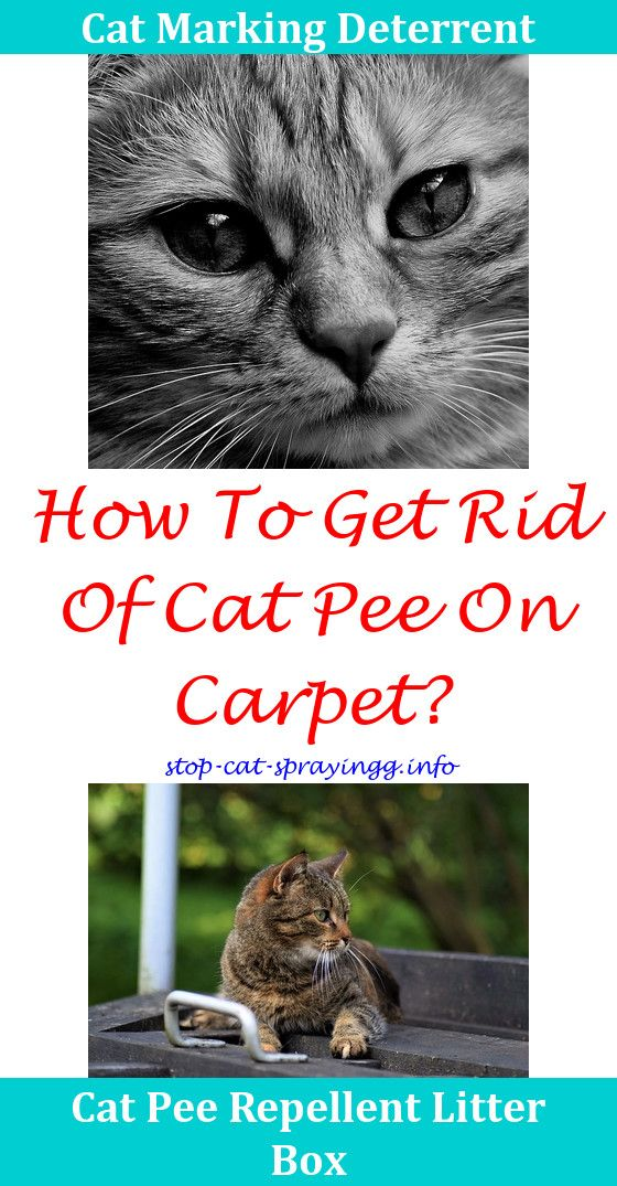 Cat Peeing On Carpet How To Removecat Odor Spray Cat Pee Out Of