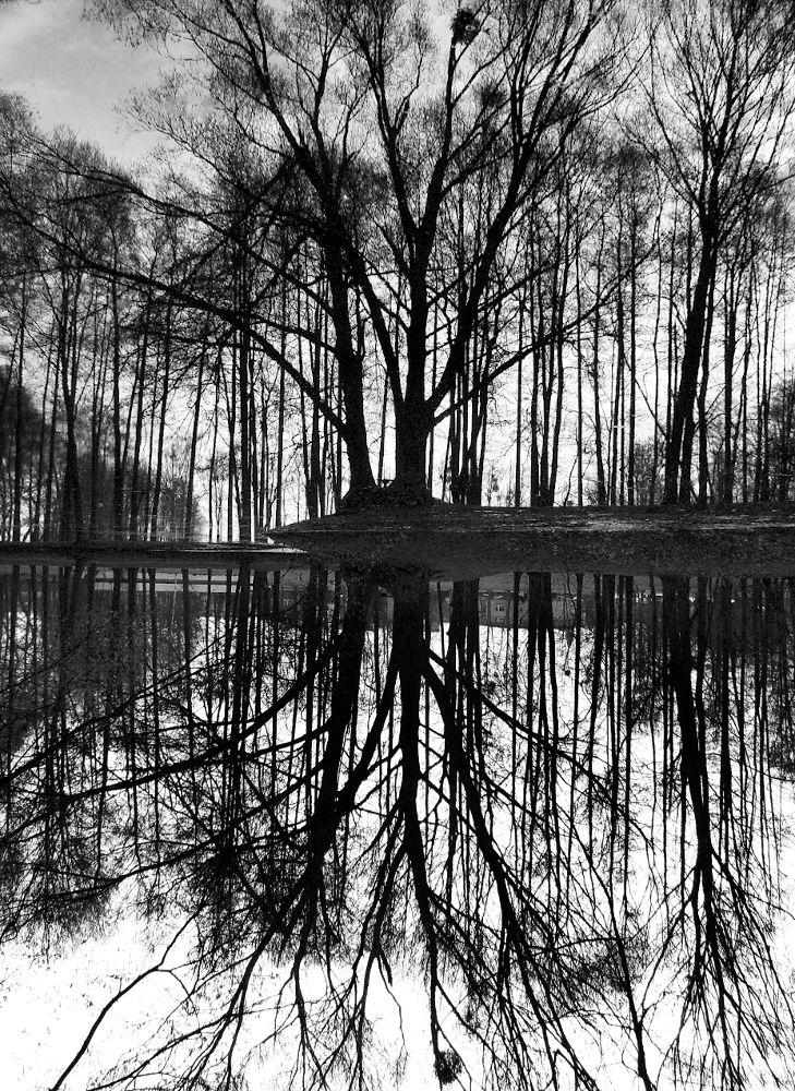 tree. by mrzn89.deviantart.com on @deviantART