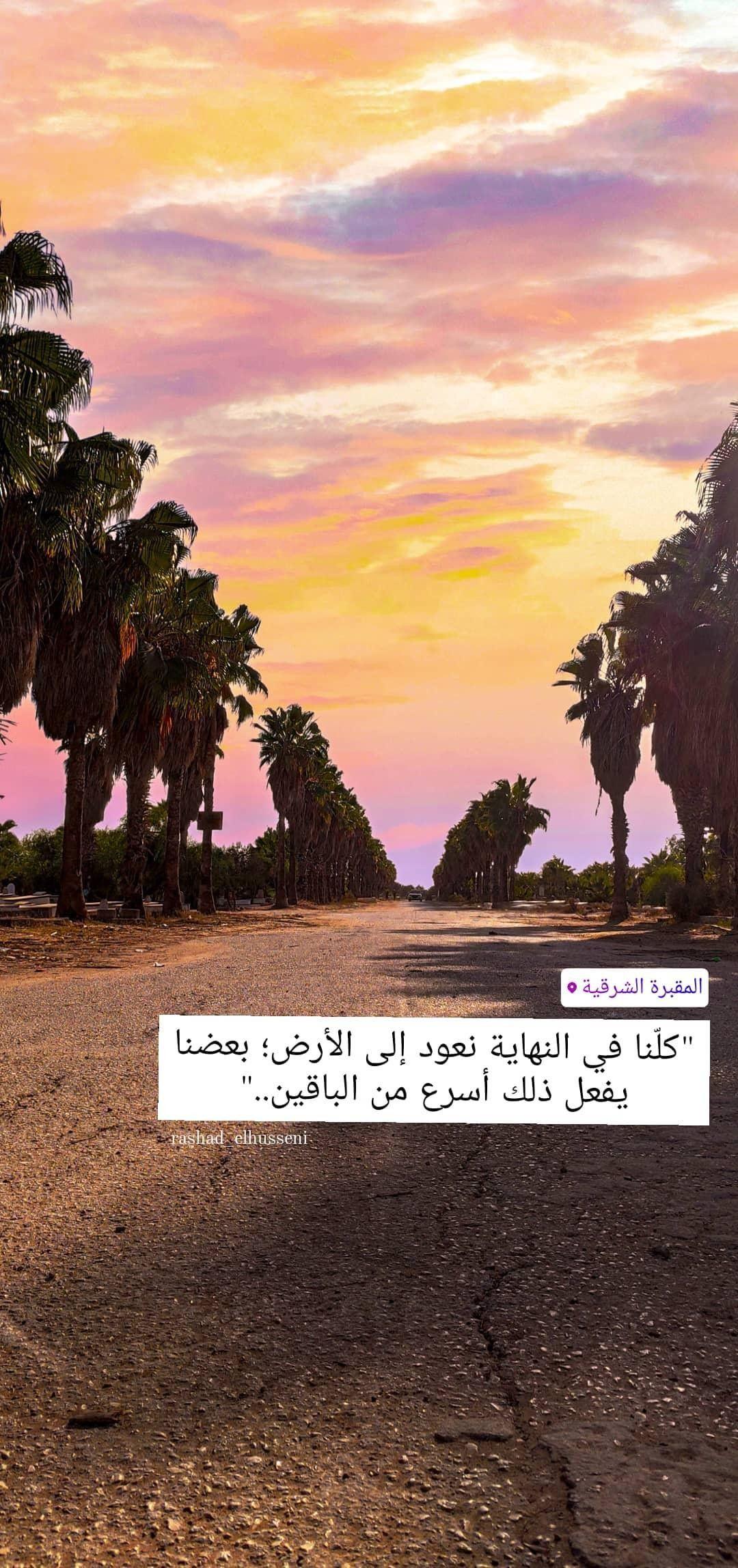 ورد أصفر طبيعة شجر اصفر غزة طبيعة جميل فلسطين القدس كلام تصوير صور ابيض صباح خير صل Instagram Instagram Photo Photo
