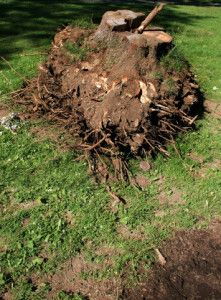 Stump Grinding Greensboro Nc Gods Way Landscaping Outdoor Gardens Lawn And Garden Stump Removal