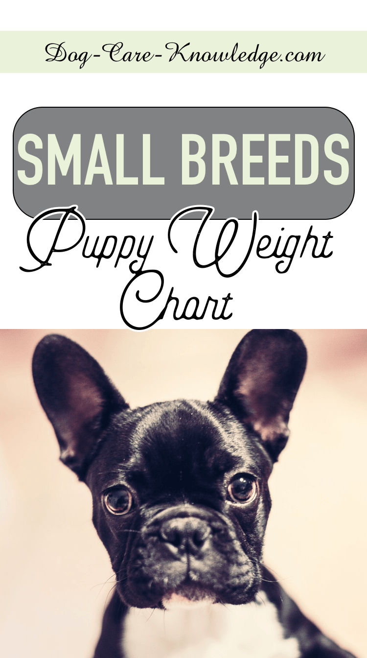 Puppy Weight Chart This Is How Big Your Dog Will Be Weight Charts Dog Weight Chart Dog Weight