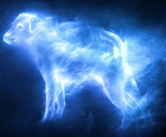 What S Your Patronus Based On Your Zodiac Sign Harry Potter Patronus Harry Potter Witch Otter Patronus