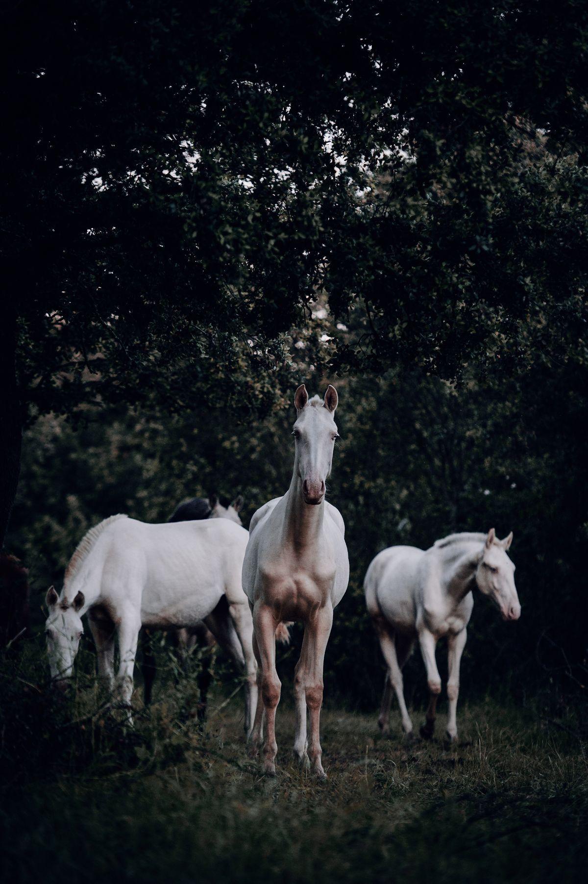 Pin Von Chiara Schwarzbock Auf Pferde In 2020 Schone Pferde Pferde Hubsche Pferde