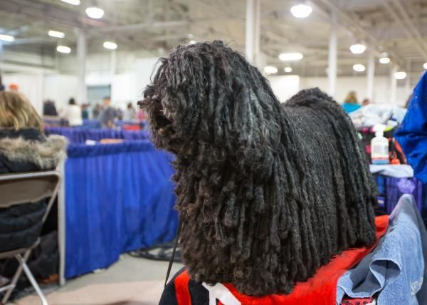 Behind  the scenes at the 2014 National Dog Show  Behind  NBC Sports   Cute   d97365