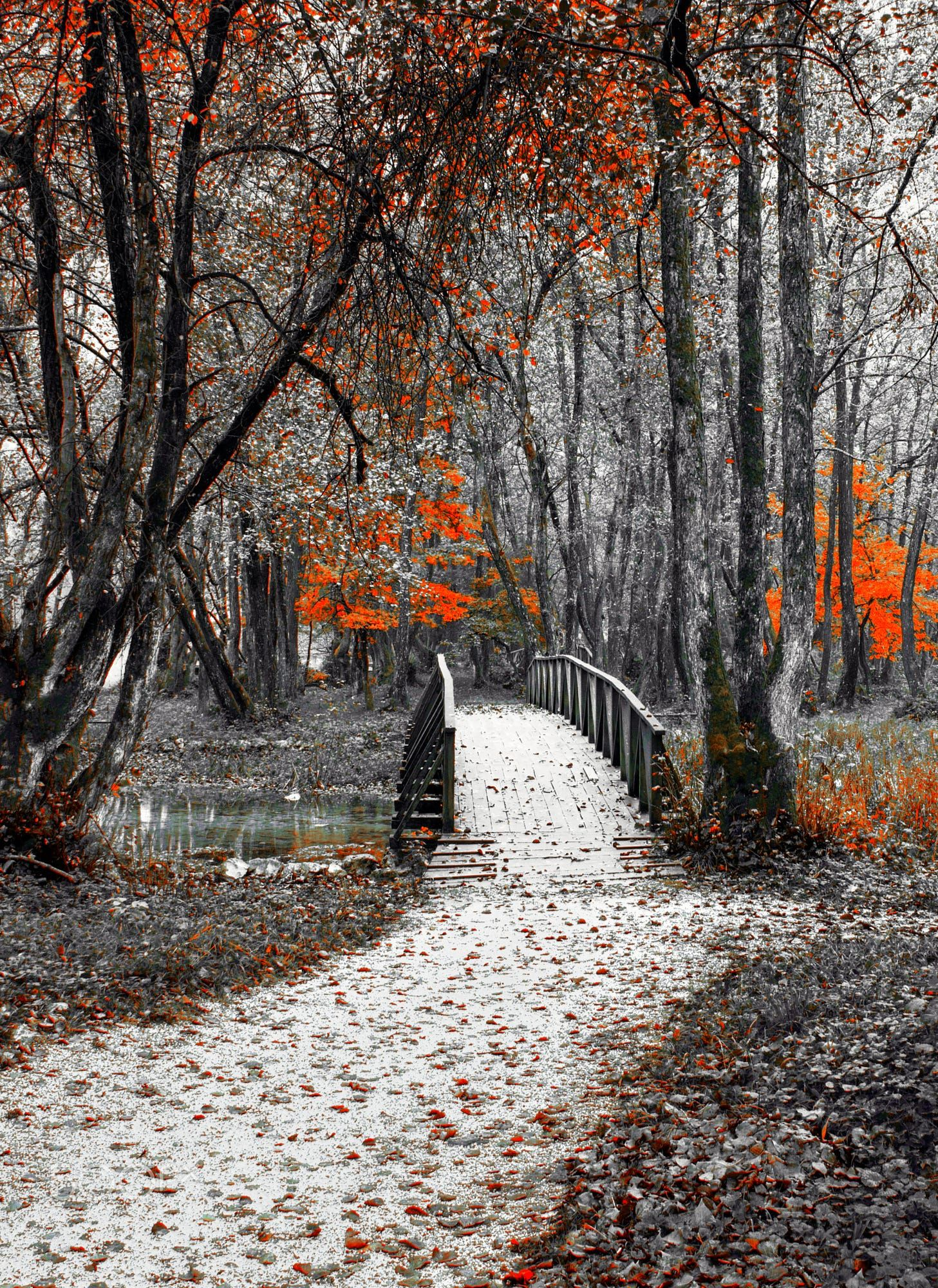 Bridge by Mevludin Sejmenovic #autumnscenery