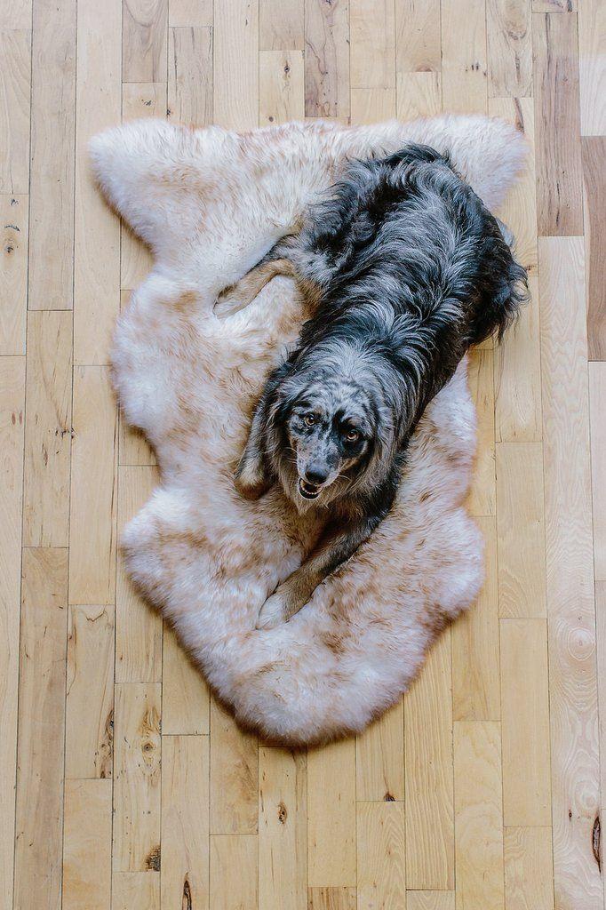 Sheepskin Dog Bed Rug Milk Honey