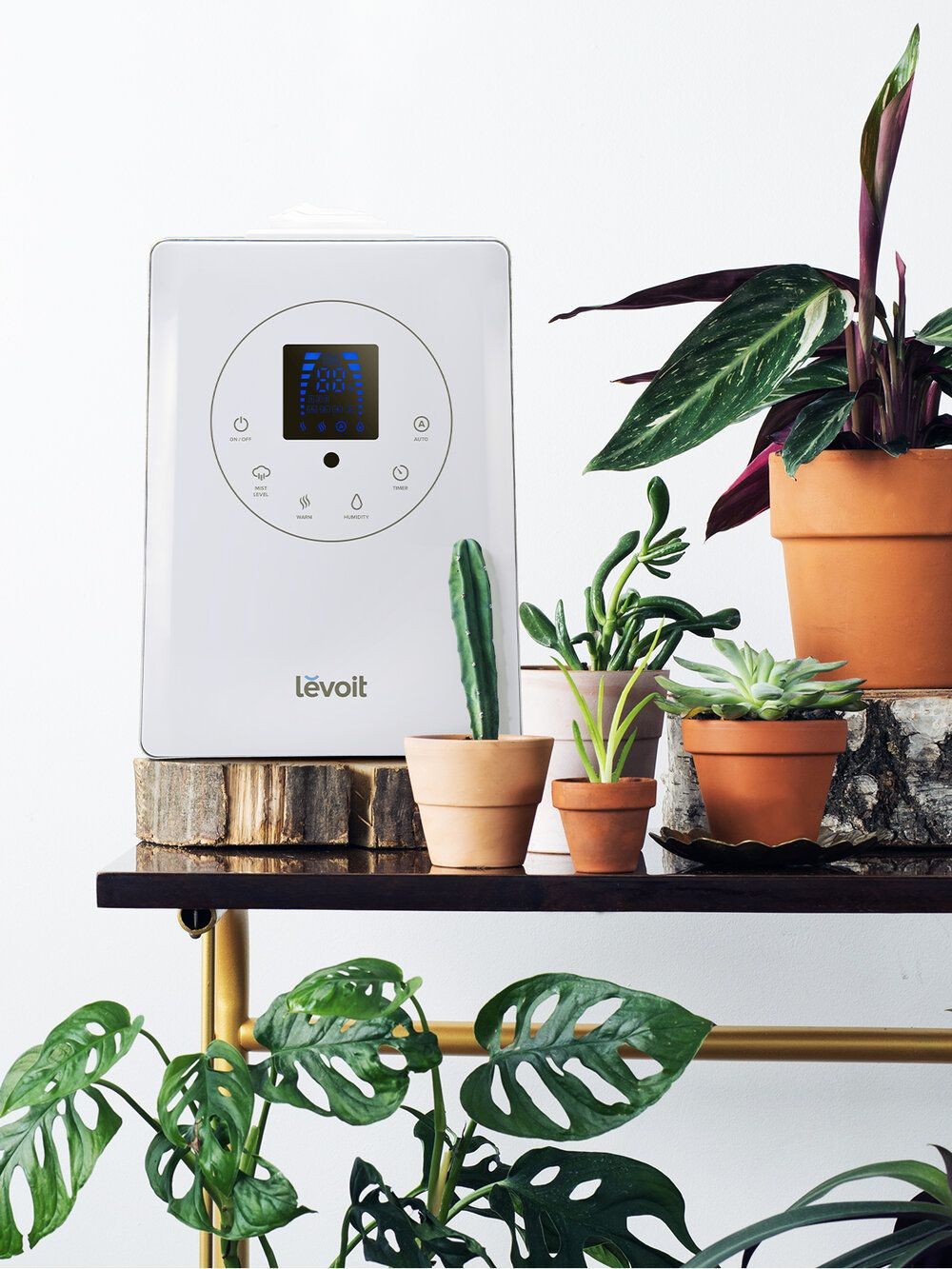 How humidifiers benefit your plants and you in 2020