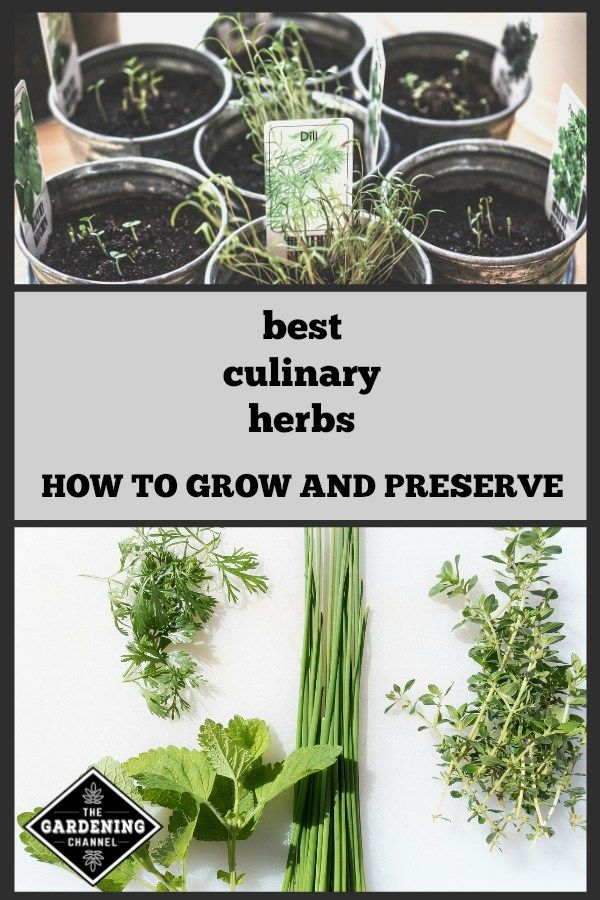 Learn the best culinary herbs to grow