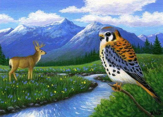 Kestrel bird mule deer stream mountains landscape limited edition aceo print art