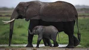 baby olifant q - Google zoeken
