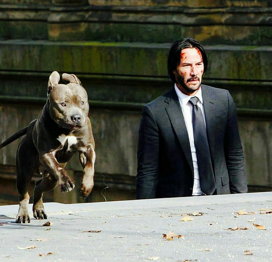 Pin by Tiffany on The Harem in 2019 Keanu reeves john