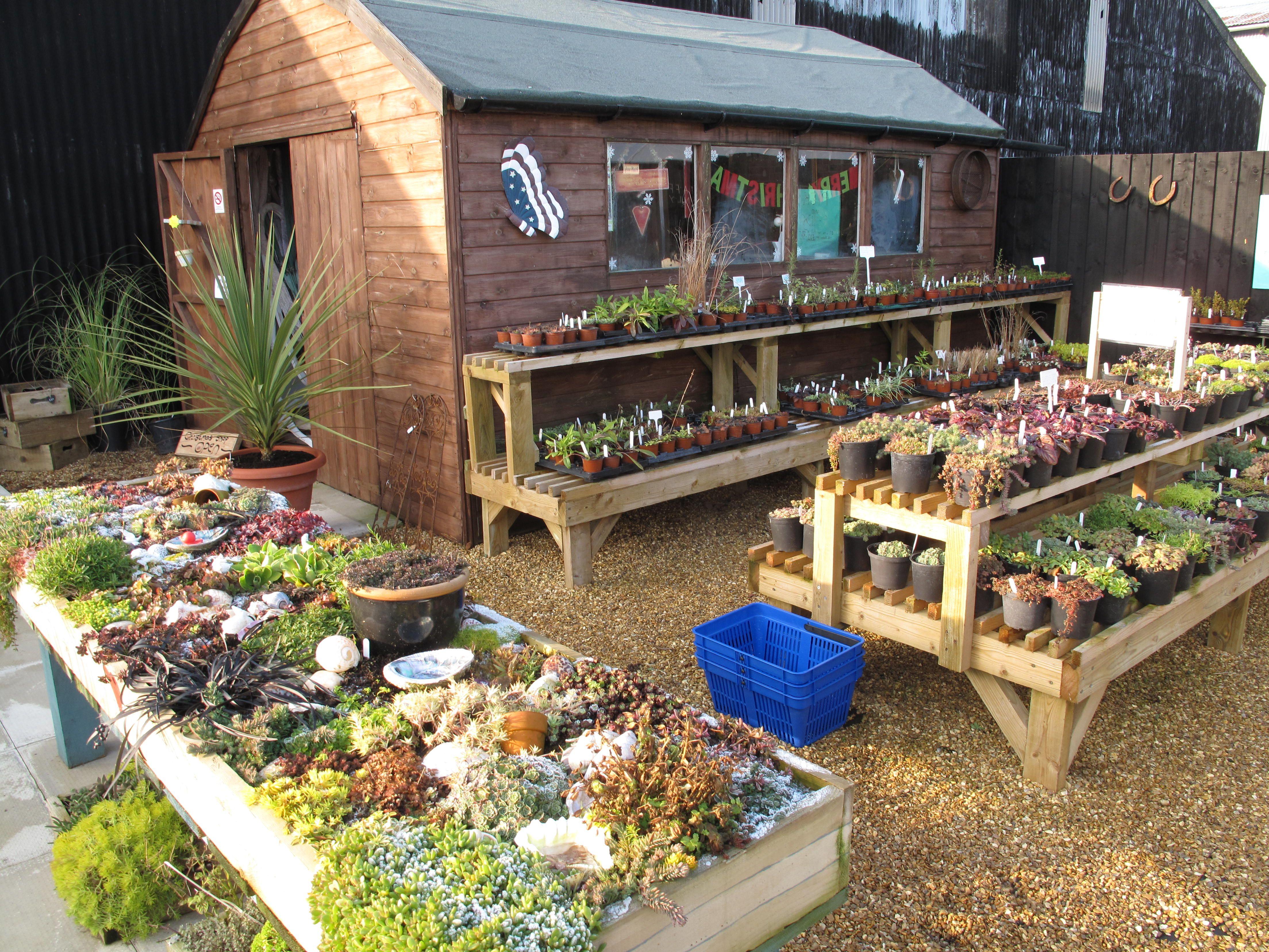 Little Dutch Barn Nursery shop, alpine garden and alpines for sale ...