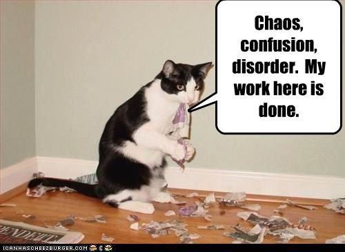 Chaos Confusion Disorder My Work Here Is Done Funny Animals Cats Crazy Cats