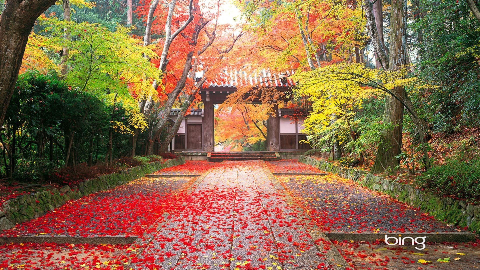 マイクロソフトbing Hdの壁紙 日本の風景テーマの壁紙 1 19x1080 壁紙ダウンロード マイクロソフトbing Hdの壁紙 日本の風景テーマの壁紙 システム 壁紙 風景 風景の壁紙 庭作りのアイデア