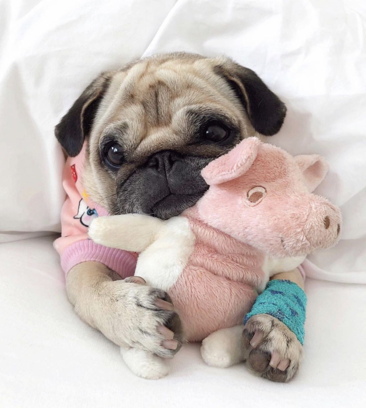 Pinterest Simonewanscher With Images Baby Pugs