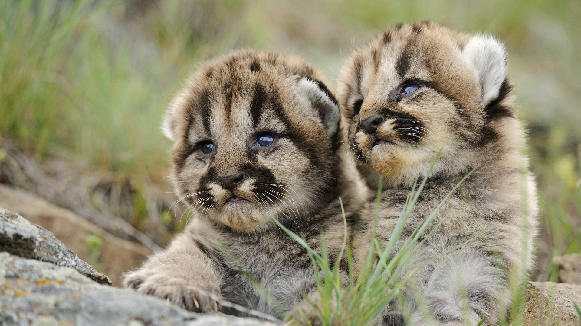Cute Animal Hd Wallpapers Hd Wallpapers Inn Cute Animal Pictures Animals Beautiful Cute Baby Animals