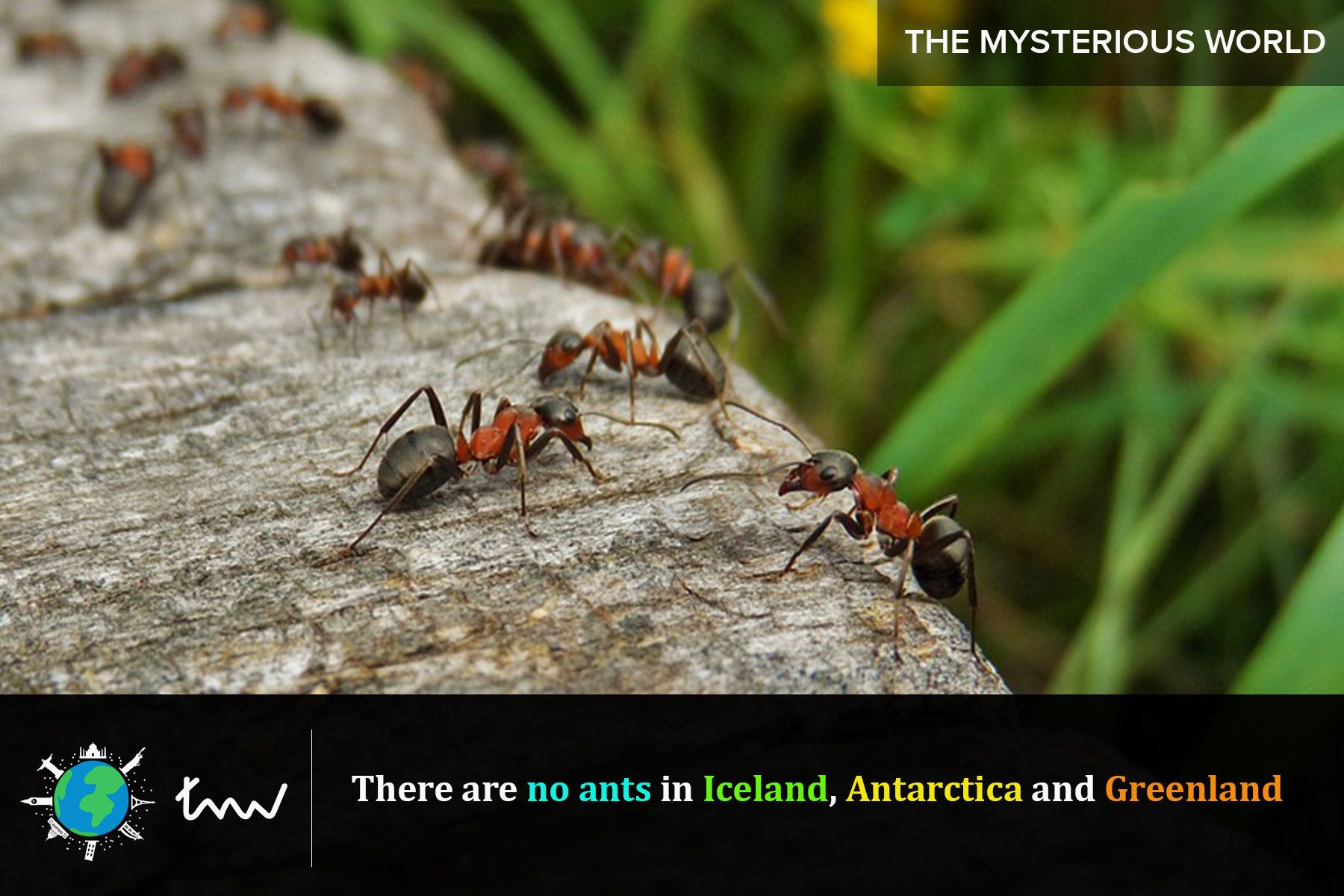 insects ants facts Kill ants, Ants, Ants in garden