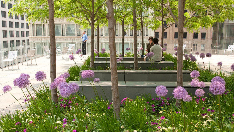 Morningstar Corporation Paisajismo Mobiliario Urbano Arquitectura