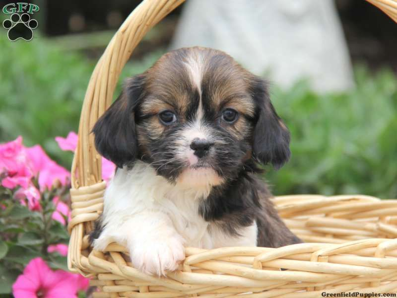Puppies For Sale By Owner In Colorado 2021