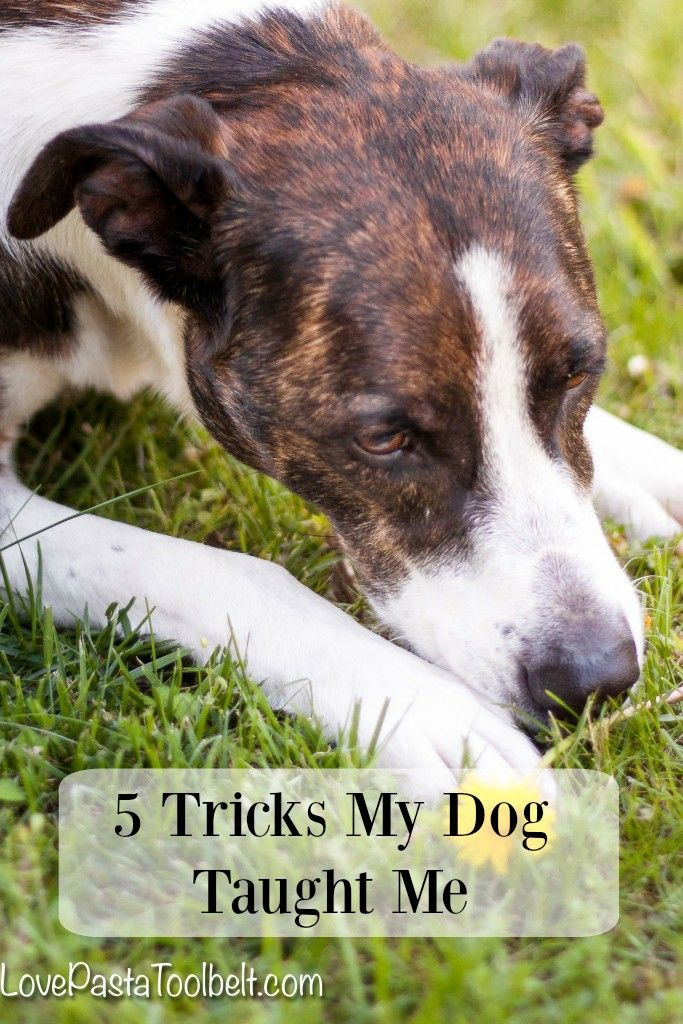5 Tricks My Dog Taught Me Love Pasta And A Tool Belt Dogs Pet Insurance Reviews Love Pet