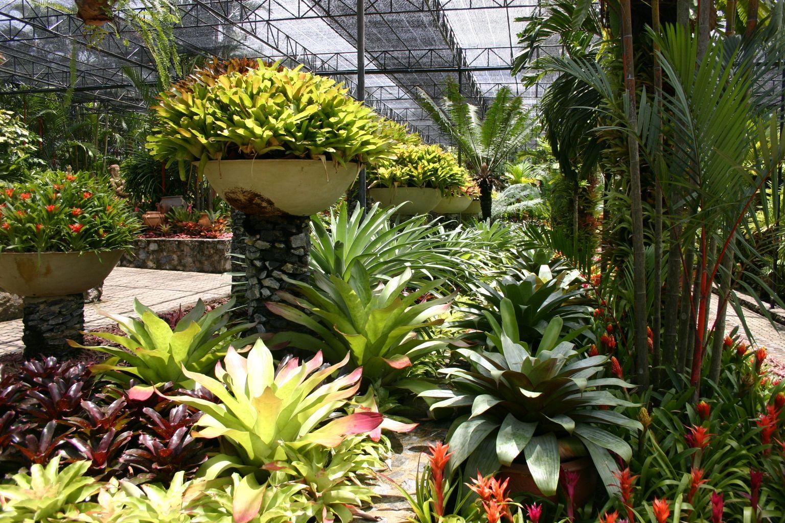 Bromeliad display at Nong Nooch Gardens in Thailand
