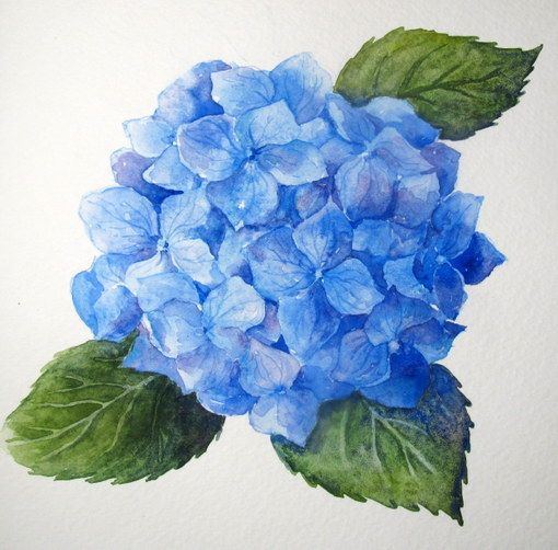 Step by step watercolor how to paint a blue hydrangea for How to paint watercolor flowers step by step