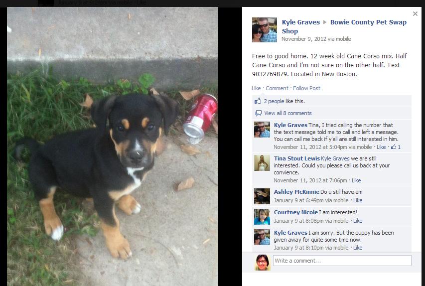 Bowie County Pet Swap Shop Adoption Costs Puppy Adoption Swap Shop