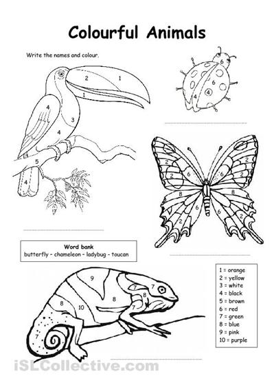 animal skin worksheet Google zoeken Kindergarten