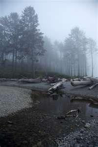 misty day in forks washington