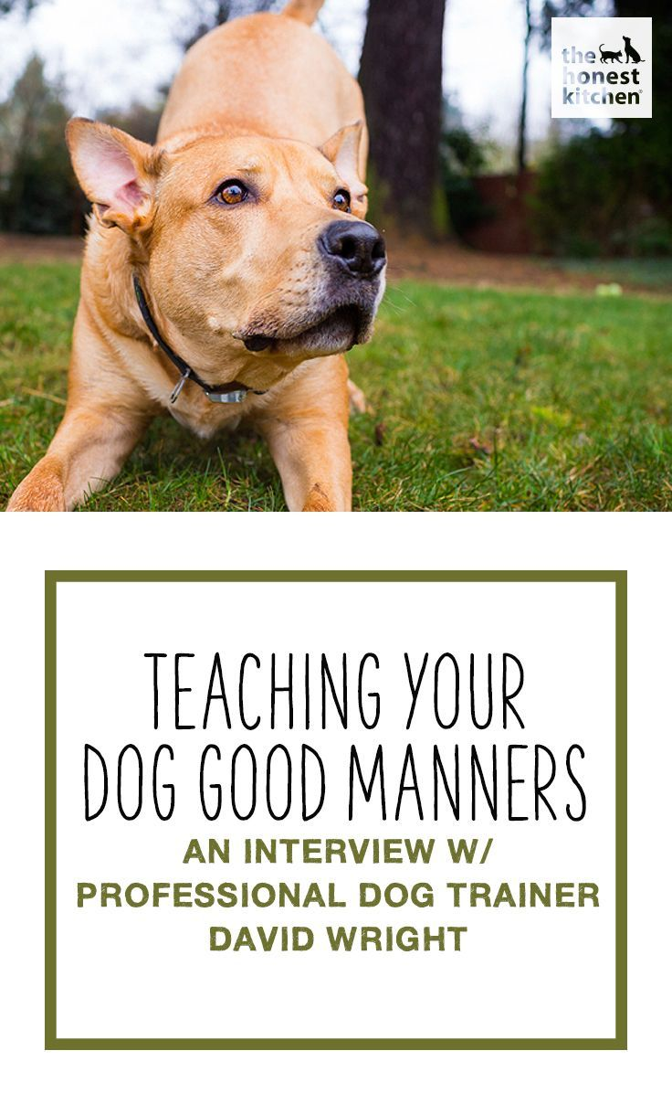 Teaching Your Dog Good Manners An Interview With Professional Dog