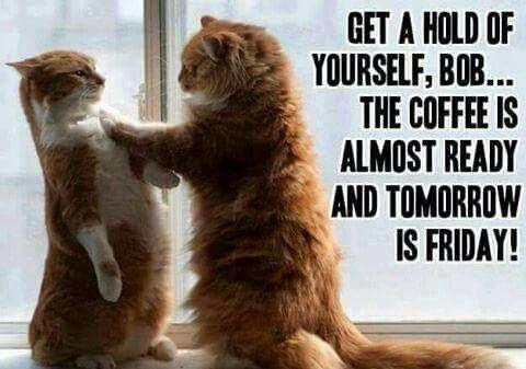 The coffee is almost ready 'Bob-Freddy' so take it steady ...