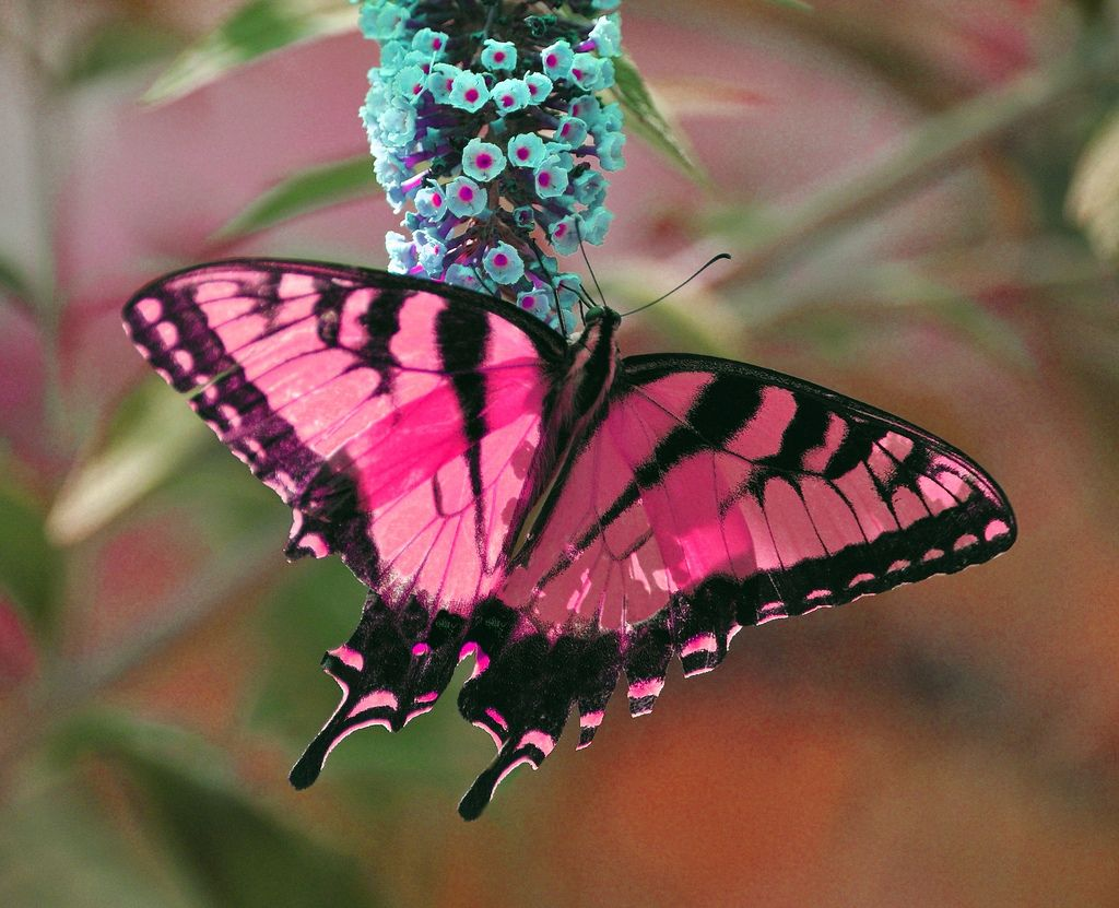 So pretty. 30 Beautiful Examples of Butterfly Photography ...