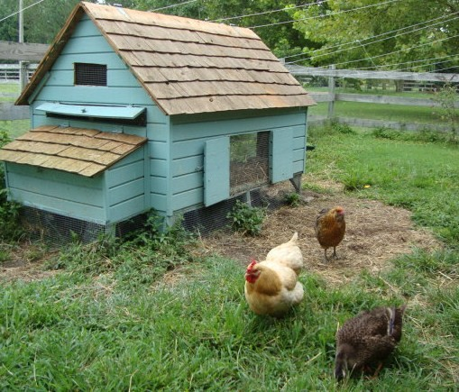 Easy diy 4 39 x6 39 chicken coop hen house plans pdf the for Chicken and duck coop