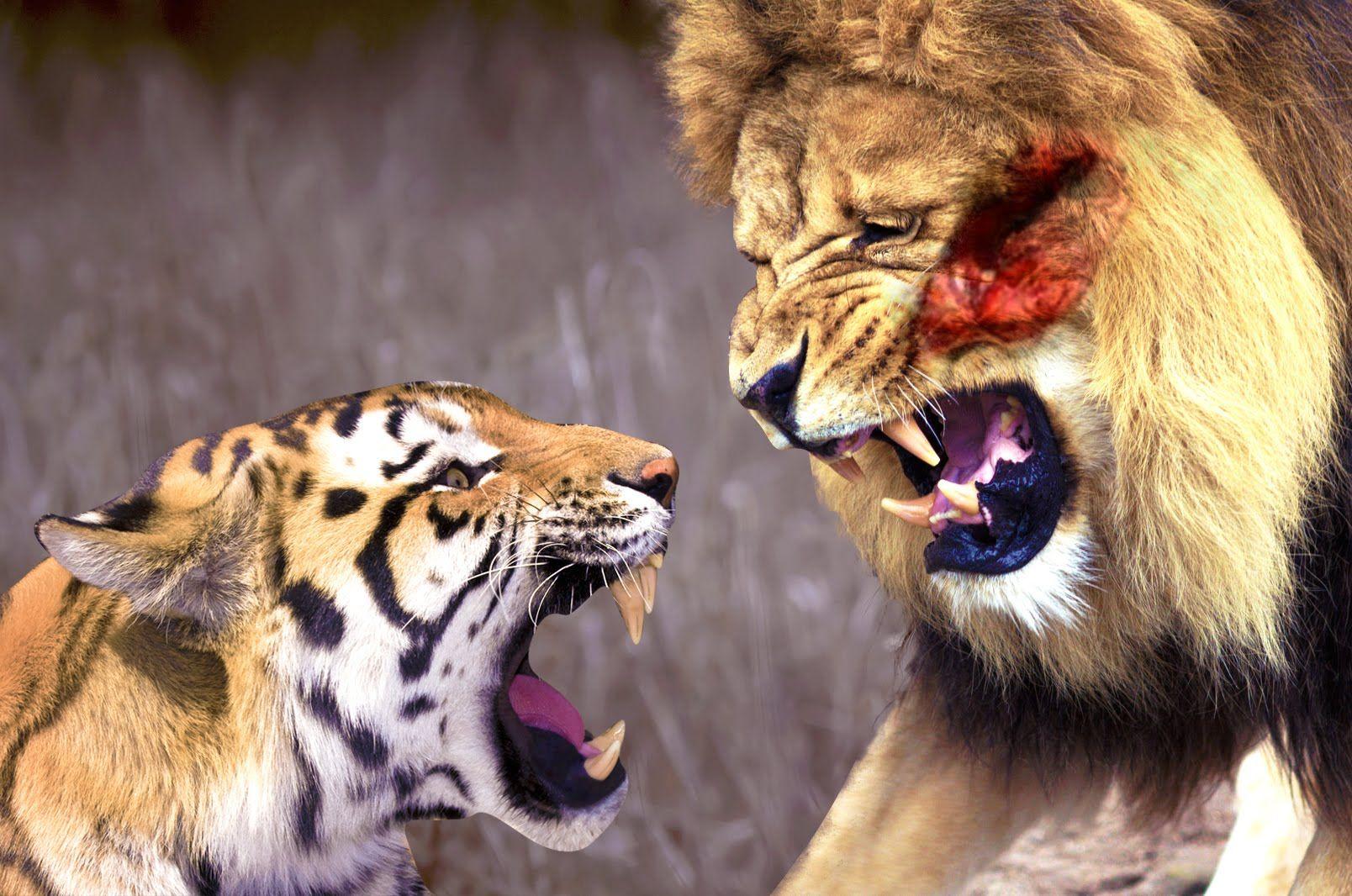 Lion, Tiger, Wild animals