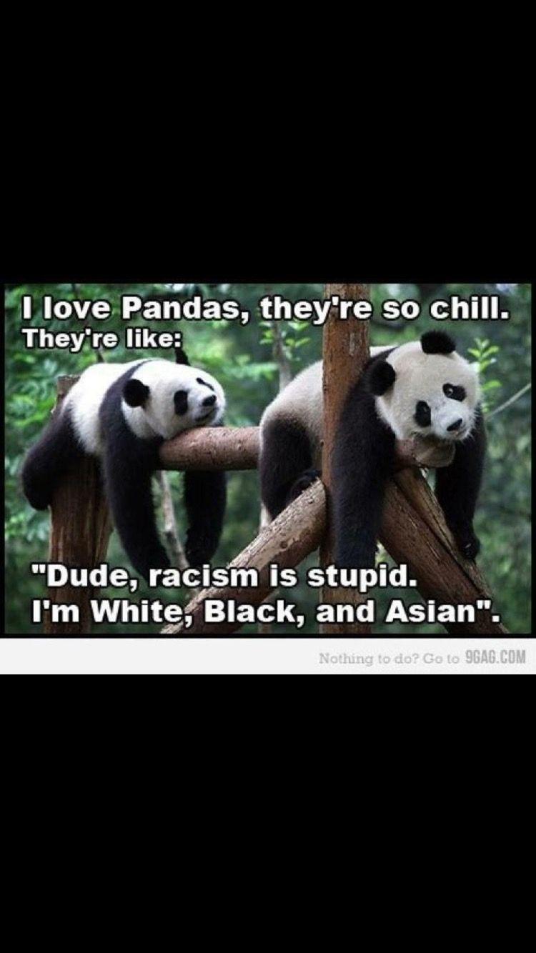 Panda Quotes Pinmelissa Bellamy On Quotes  Pinterest