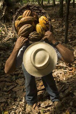 RSC.-Un total de 65 ciudades españolas se suman este sábado al Día Mundial del Comercio Justo que incide este año en el cacao