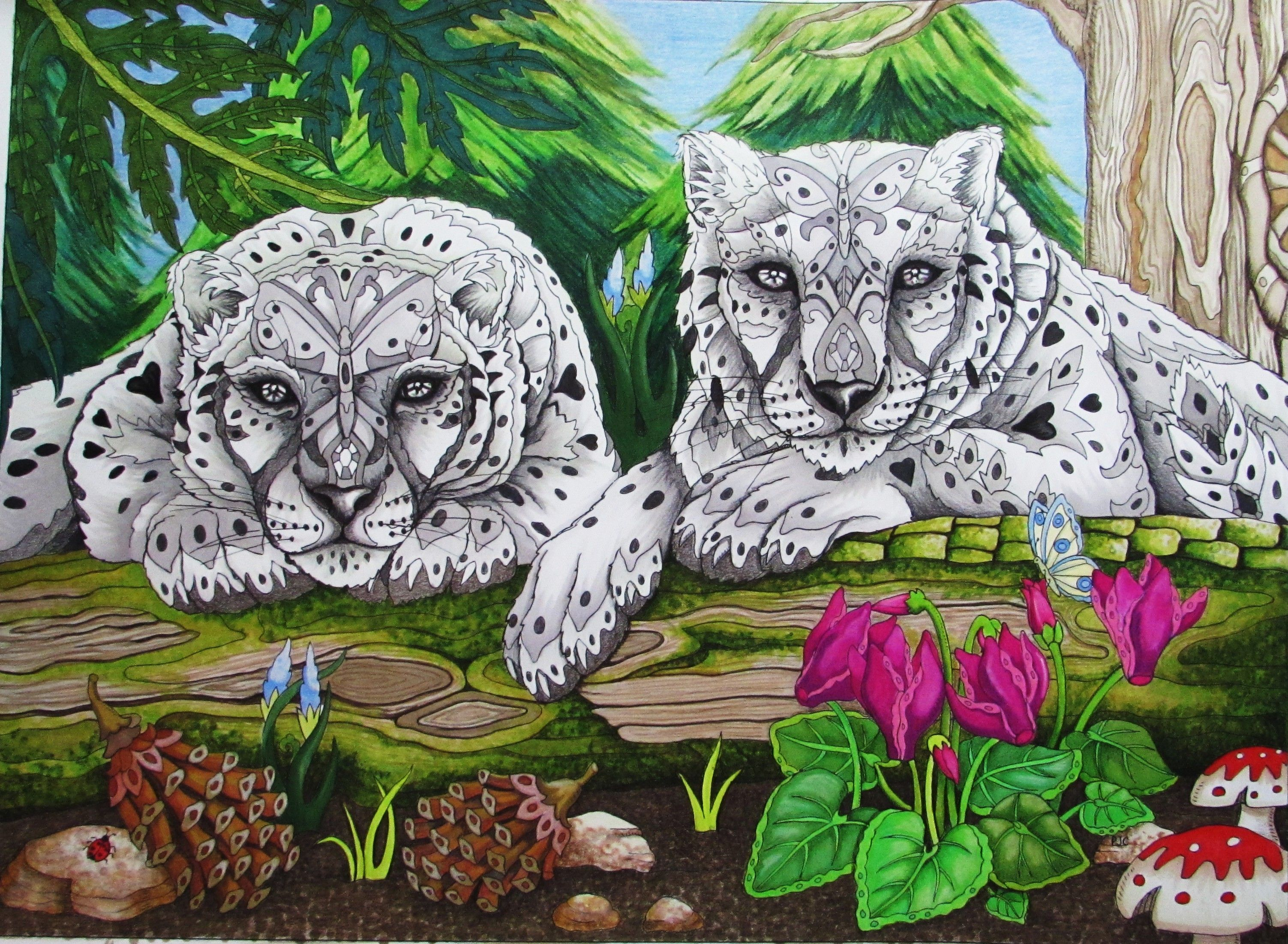 Snow Leopards Colored By Jules Cote From Color Me Pamela J Book 4 Available July At Costco