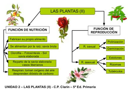 Resultado de imagen de esquema plantes funcions