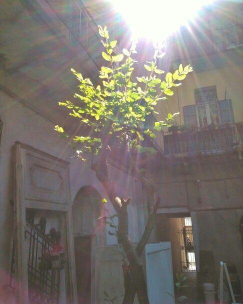 Interiore. #interiore #interior #arsenalepiu #wunderkammer #wood #tree #light #sun #photo