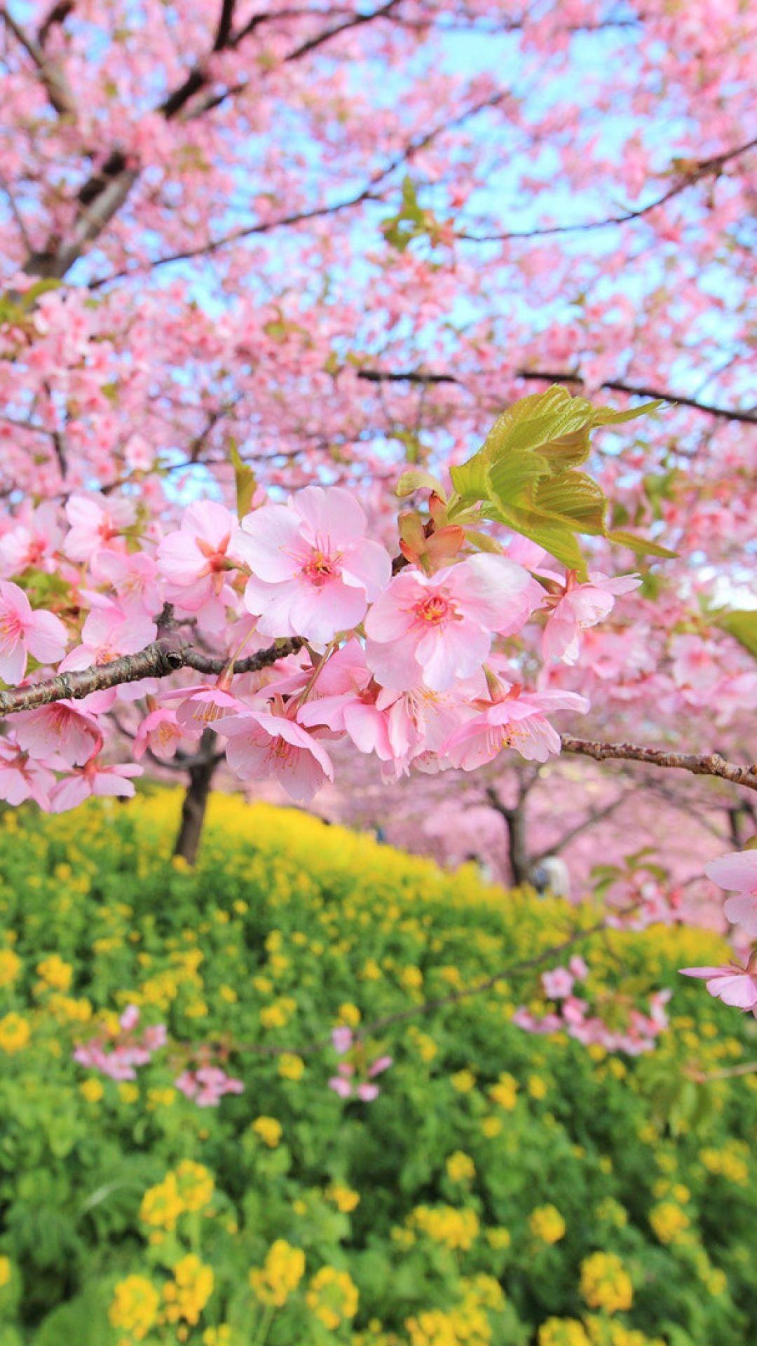 spring, bloom, tree, flowers Spring wallpaper, Beautiful