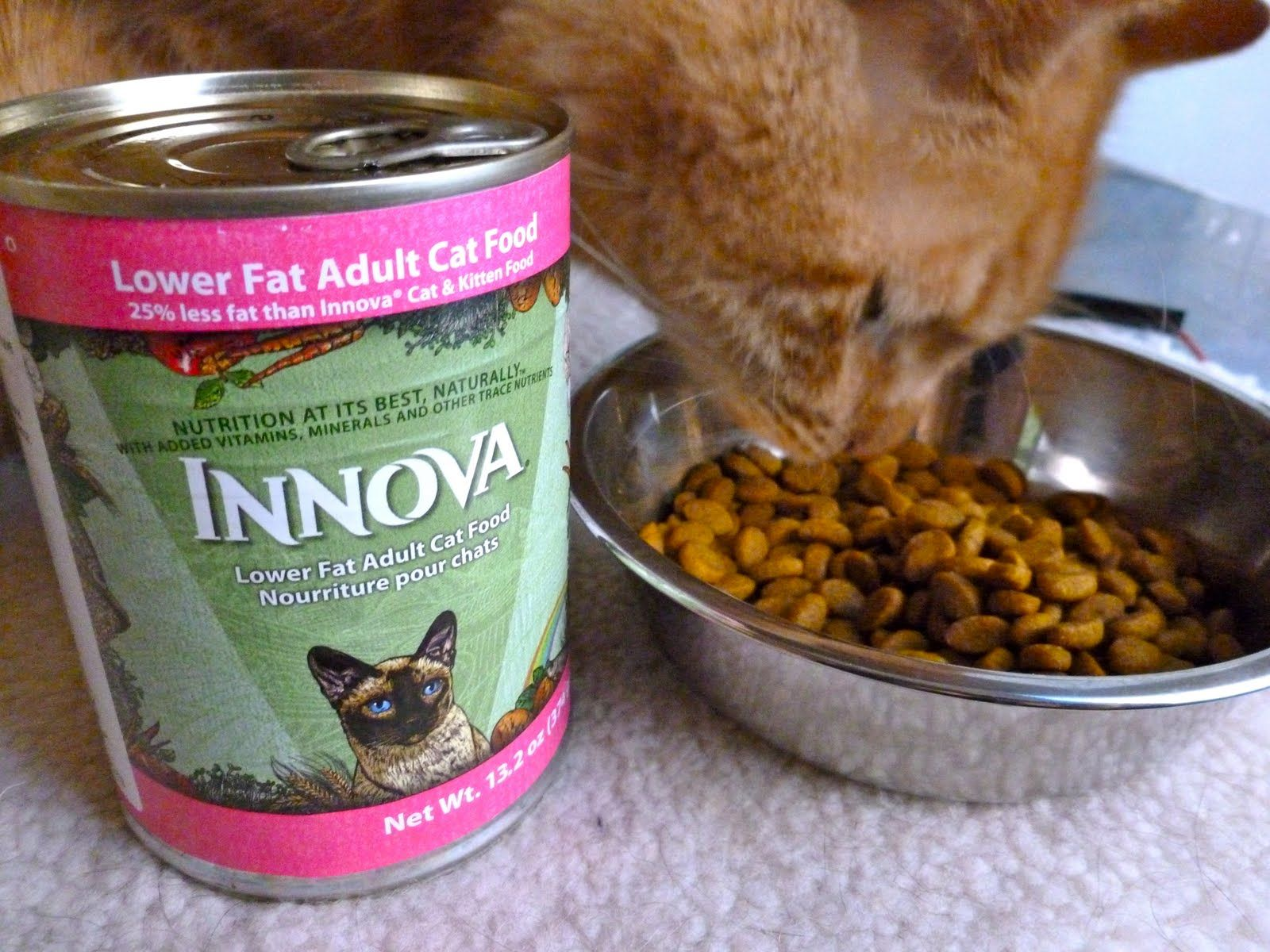 How To Turn Dry Kibble Into Wet Food Works For Cat And Dog Food With Images Dog Food Recipes Food Food Animals