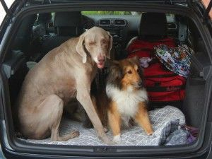 5 Tips For Easy Road Trips With Dogs