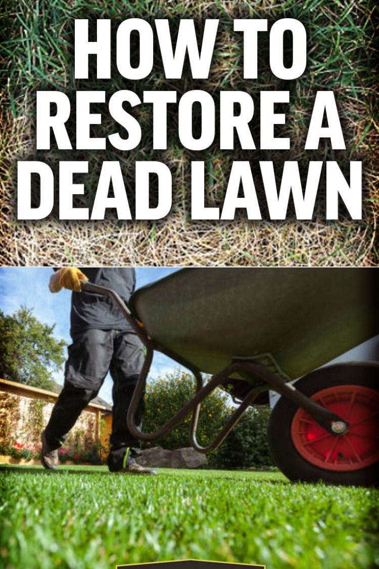 How To Bring Your Lawn Back To Life In 5 Simple Steps With Images Lawn And Landscape Lawn